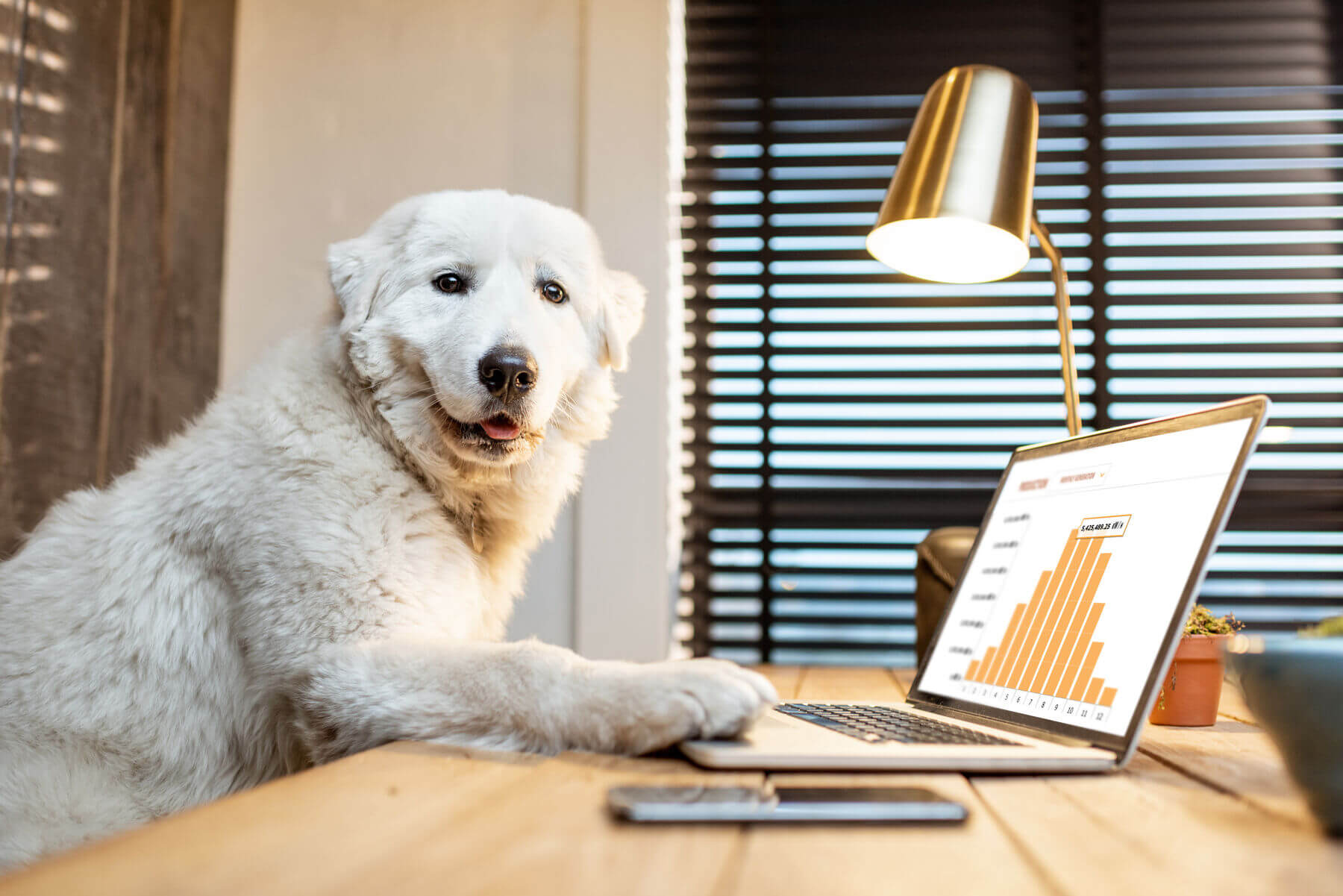 white dog in front of a laptop
